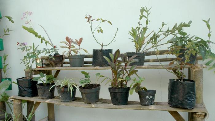 Mini garden