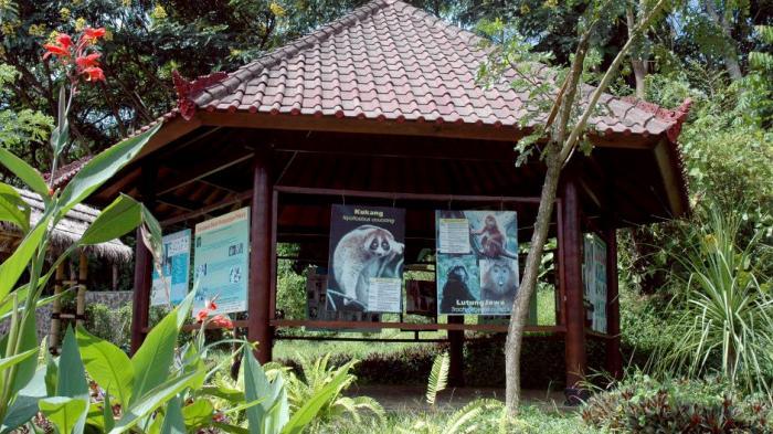 Primate Corner