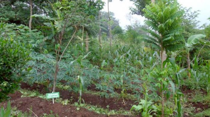 P-WEC's Organic Farming
