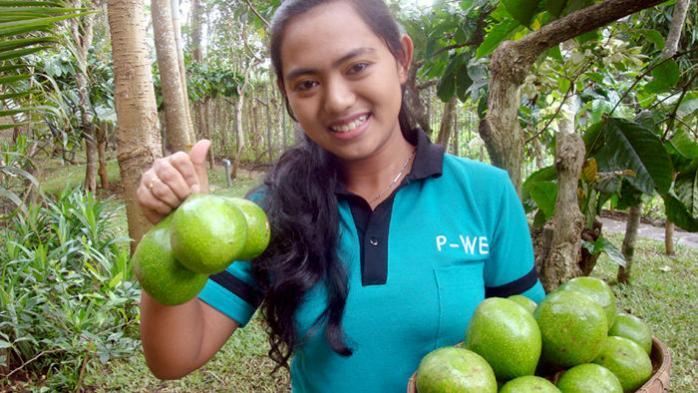 Organic avocado crops