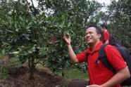 Agrowisata petik jeruk di sekitar P-WEC