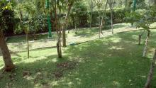 The green-grassed yard