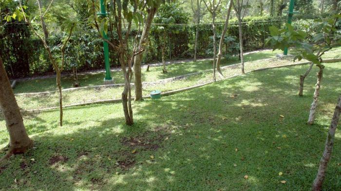 Rumput hijau yang menyegarkan